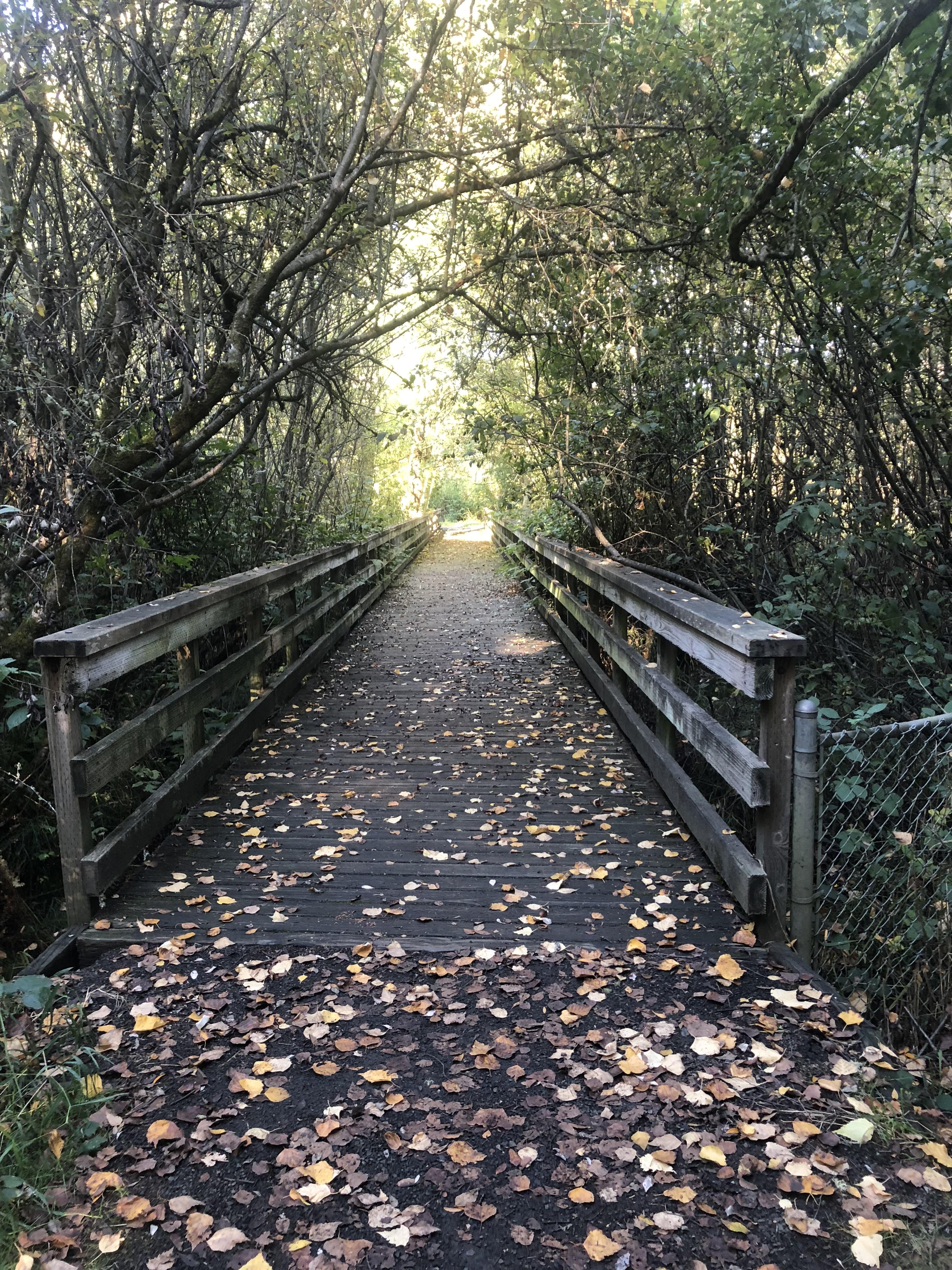 Bridge WA